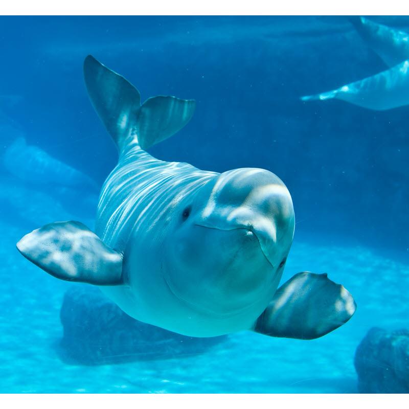 Lotteworld Aquarium