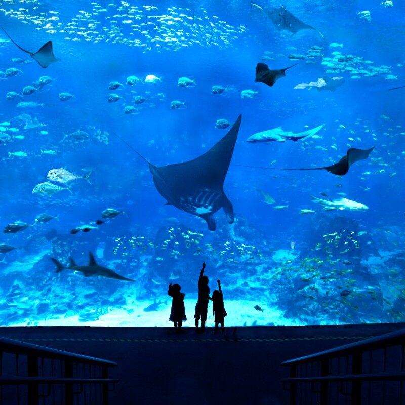 S.E.A. Aquarium™ One-Day...