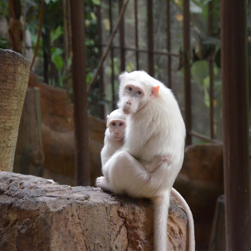 KL Tower Mini Zoo